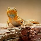 Common Side-blotched Lizard~ Eye Contact by Kimberly Chadwick