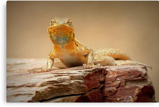Common Side-blotched Lizard~ Eye Contact by Kimberly Chadwick