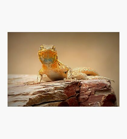 Common Side-blotched Lizard~ Eye Contact Photographic Print