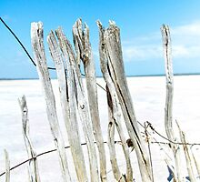 Salt Lake Fenceline I by georgina1509