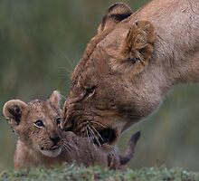 Lioness and Cub by barrach