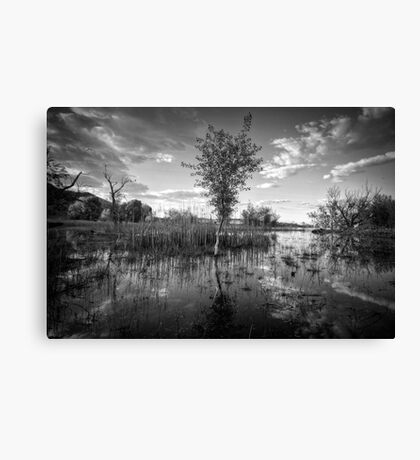 Swamp Stand Canvas Print