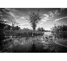 Swamp Stand Photographic Print