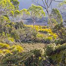Tasmanian Landscape by Elaine Teague