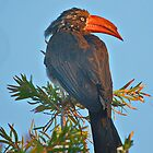 Hornbill In The Sun by Warren. A. Williams