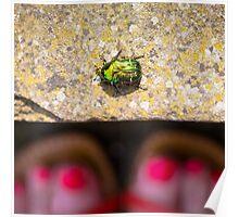 May Bug Cockchafer Poster