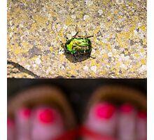 May Bug Cockchafer Photographic Print