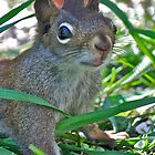 The Great horned Squirrel, Iphone case by Carolyn Clark