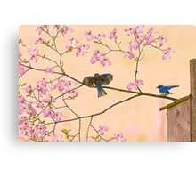 Bluebirds in Pastel Pinks Canvas Print