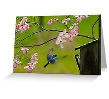 Swallows visit Bluebirds Greeting Card