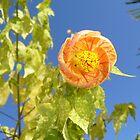 Orange flower by EmilFingal