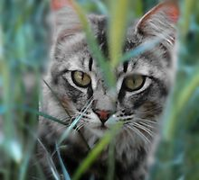 Cat in the Grass by Doreen Erhardt