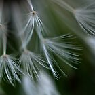 Dandelion Different V by Nicole W.