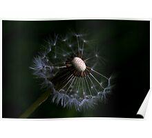 Dandelion Different VI Poster