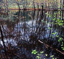 Beaver Pond by Nazareth