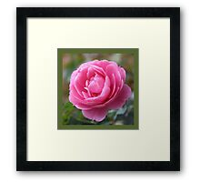 pretty pink rose flower square photo print. Framed Print