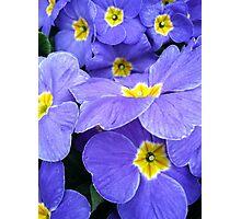 Primrose blue Photographic Print