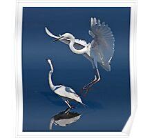 Great Egrets ( Ardea alba ) Poster