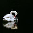 Peace on a still pond by Tom Becker
