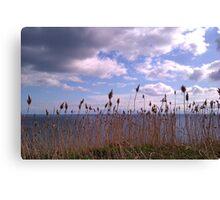 Grass heads Canvas Print