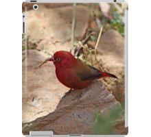 Red-billed Firefinch iPad Case/Skin