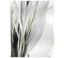 Dry flower 5 Poster