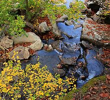 Down Stream by NatureGreeting Cards ©ccwri