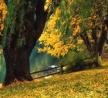 Pond Willows by Doreen Erhardt