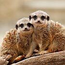 Cute Meerkats by Tony Smith