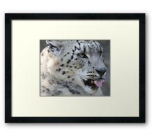 Snow Leopard Framed Print