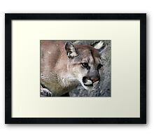 Attentive Look Framed Print