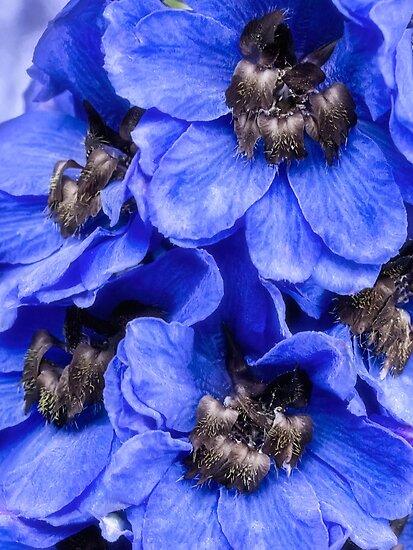 Love is blue by Celeste Mookherjee
