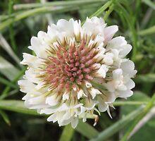 Clover Flower by Sheryl Hopkins