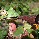 A Garden Frog by Ginger  Barritt