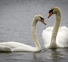 Love Birds by Mikell Herrick
