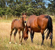 Daisy's Foal by Deborah Clearwater