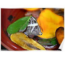 Zebra Mosaic Butterfly Poster