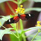 Red, white and black butterfly by Meghan1980