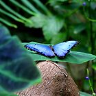 Blue Morpho Butterfly by Meghan1980