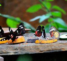 A bunch of butterflies by Meghan1980