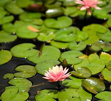 Flower on Lily by jswolfphoto