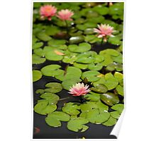 Flower on Lily Poster