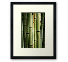 Bamboo Shoots Framed Print
