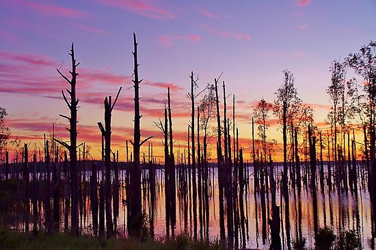 Deadwood Sunrise by Len  Gunther