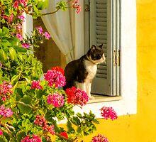 Enjoying The Sun by EvaMarIza
