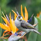 A noisy miner on a bird of paradise(Stralizia)!!! by jozi1