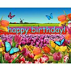 Happy Birthday Tulips Holland by Koekelijn