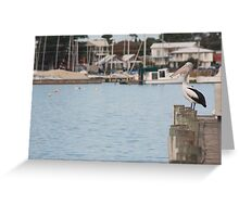 Pelicano, The Story of a Pelican Greeting Card