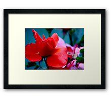 Graceful Nature Framed Print