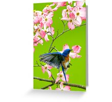 Eastern Bluebird and Red Dogwood Greeting Card